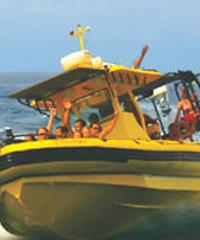 Raft Whale Watching, Dolphin Watch and Snorkeling Tour