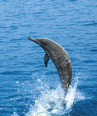 Ocean Spirit Dolphin Watch - Pacific Whale Foundation