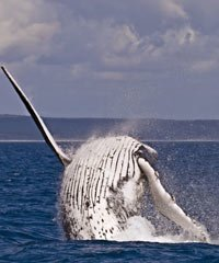 Whale Watching Tours on Maui