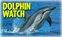 Oahu Tours Oahu Activities Island of Oahu Discount Tour Oahu Discount Activity - Dolphin Watch
