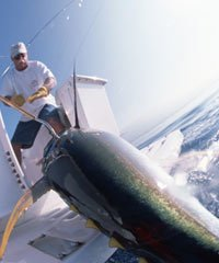 Sport Fishing Private Charter