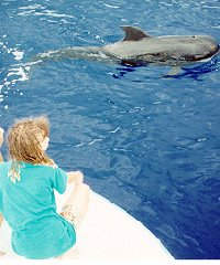 Private Dolphin or Whale Watch