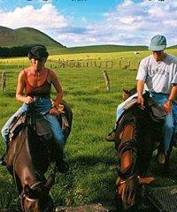 Wrangler Horseback Ride (4 Hour)
