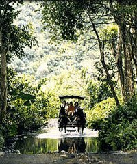 Waipio Valley Wagon Tours