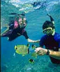 SeaFun Guided Snorkel