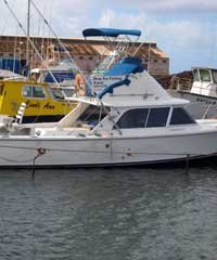 31' Bertram Sportfisher