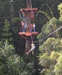 Tree-Top Zipline Tour and Adventure