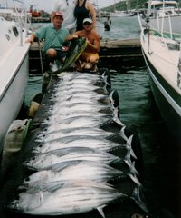 Helicopter tours,Deep Sea Charter Fishing, Whale Watching