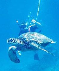 Molokini - Aqua Adventures