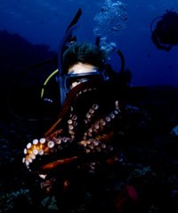 Night Shore Dive