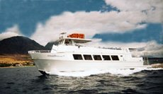 Whale Watch Early Bird - Kaulana / Lahaina Cruise Co