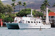 Whale Watch - Kaulana / Hawaii Ocean Project
