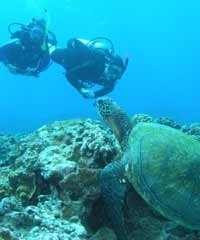 Intro Turtle Reef Dive