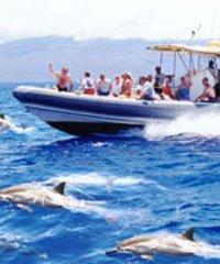 Lanai Dolphin Adventure - Maui Adventure Cruises