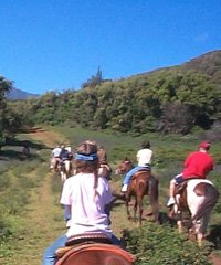 Horseback AM Ride
