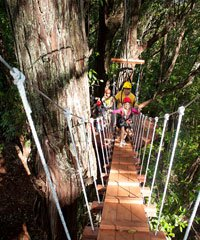 Zip-line Piiholo, Horseback Adventures Upcountry, Zip-line Tours and Adventures