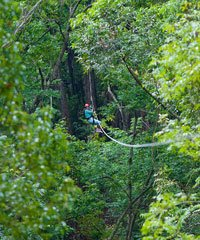 Canopy Tour (6 Lines)