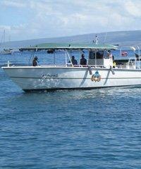 Lanai Dolphin Safari - Safari Boat Excursions