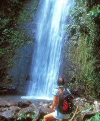 # 9 Jurassic Park Waterfall Adventure  - Oahu Nature Tours