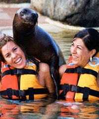 Sea Lion Encounter - Sea Life Park