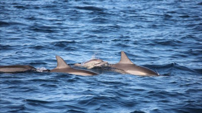 Encounters with Otherworldly Dolphins