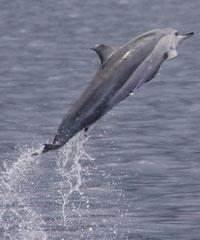 Dolphin Swim and Snorkel - Kamanu Charters