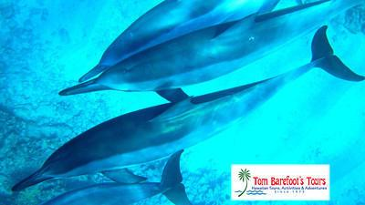 Dolphins Can Be Found On All the Hawaiian Islands