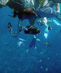 Whale Watch and Snorkel Molokini - from mid December to April - Blue Water Rafting