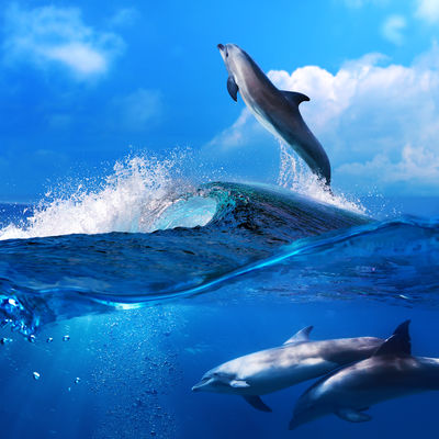 Will You be able to Swim with the Dolphins on Maui?