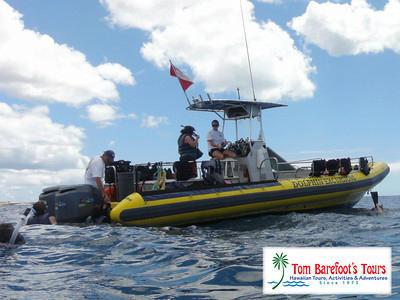 Dolphin excursions swimming with dolphins tours