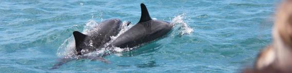 Travel Blog #134 - Waianae's Dolphin Excursions