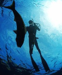 Spearfishing Blue Reefer