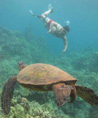 Deluxe Makena Turtle Snorkel Tour