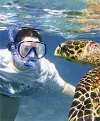 Best Ultimate Kauai Guided South Shore Snorkel Adventure