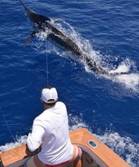 Book the High Flier Sportfishing.