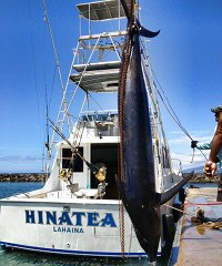 Hinatea Sport Fishing