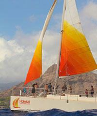 Tradewind Sail