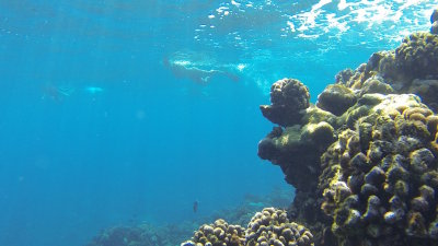 How Trade Winds affect Shore Diving