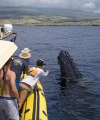 Ultimate Whale Watching Adventure  - Adventure X Boat Tours