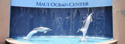 Travel Blog #178 - Exploring Maui's Aquarium at Maui Ocean Center