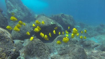 Importance of Coral Reef's Surrounding Hawaiian Islands