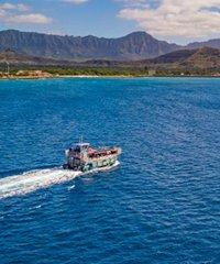 Oahu Mirai Premium Mid-Day Dolphin