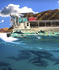 Book the Oahu Sunrise Dolphin with Iruka Hawaii Experiences