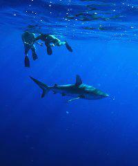 Pelagic Dive Tour - Island View Hawaii