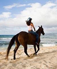 Sunshine Group Ride - Hawaii Polo Oceanfront Trail Rides