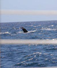 Lucky Lady-Whale Watch Cocktail Cruise