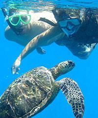 Reserve the South Shore Turtle Adventure (4 hrs) with Kelii's Kayak Tours.