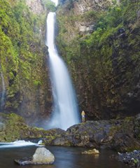 Hana Waterfall and Jungle Tour