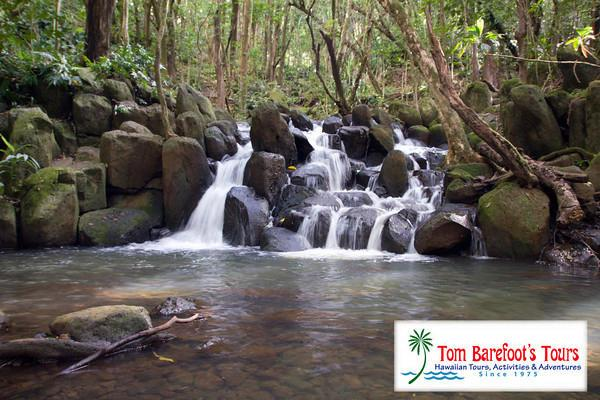 Hawaiian Streams and Waterfalls are Places Where You Can Catch Leptospirosis