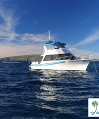 Snorkeling, Introduction and Certified Dives on Maui